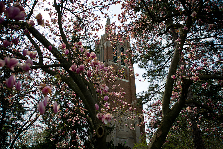 View of the Beaumont Tower through spring trees in bloom.